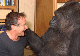 Robin williams & koko